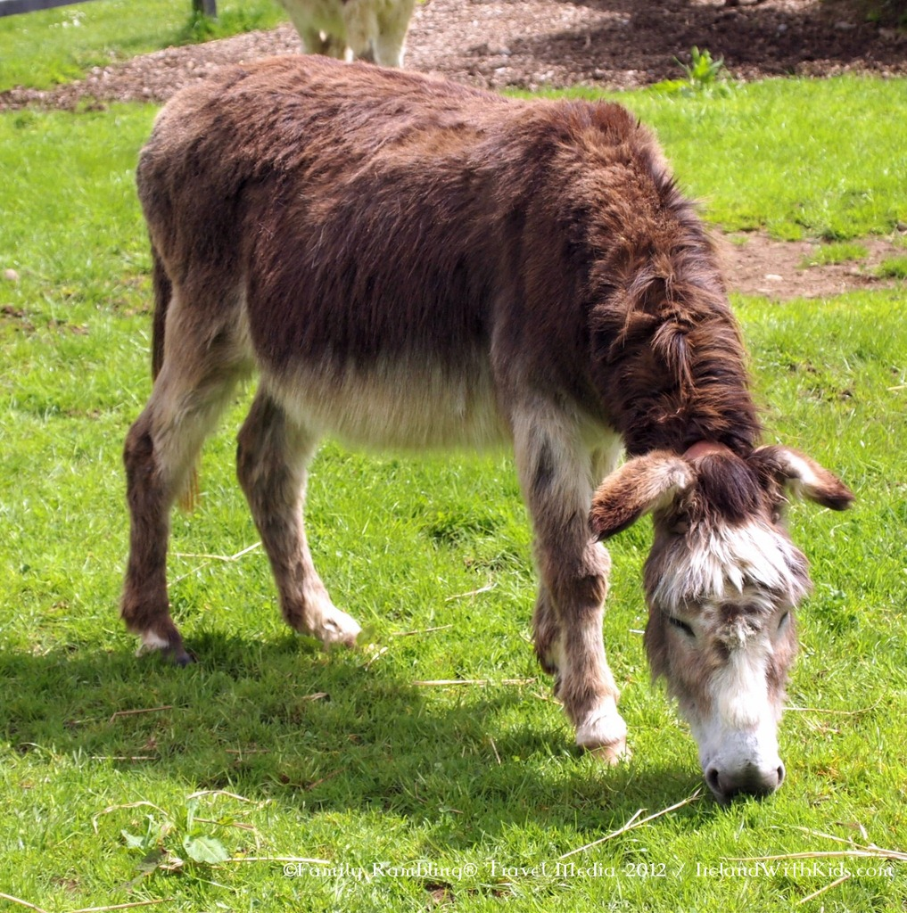 Donkey Sanctuary in Ireland