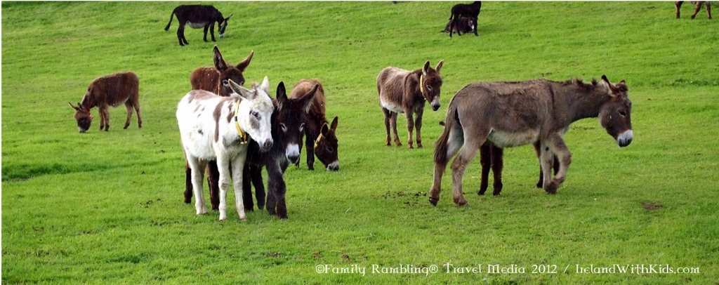 Donkeys at the Donkey Sanctuary in Liscarroll, Ireland