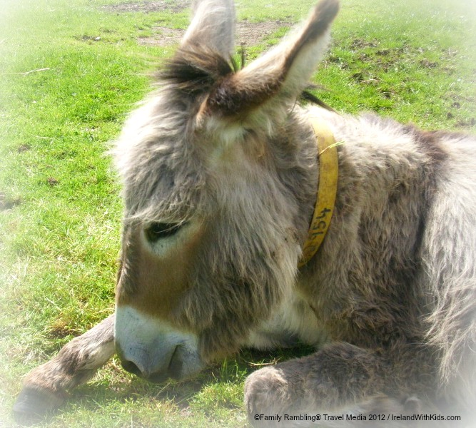 At the Donkey Sanctuary in Ireland