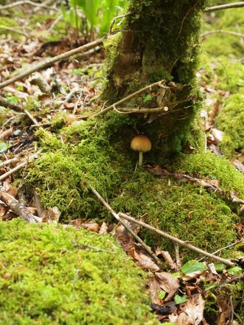 Irish mushroom