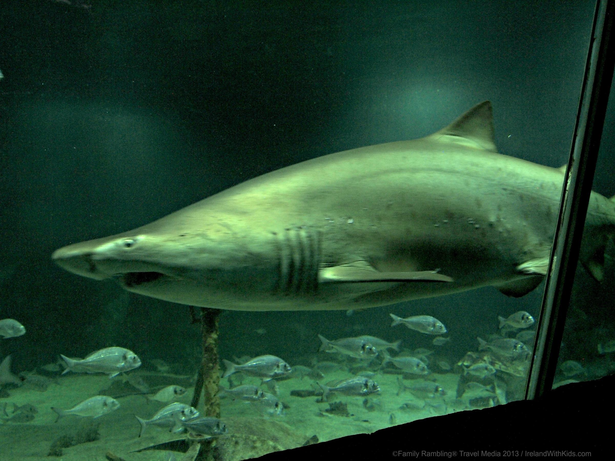 Pet shark tank shark tank at oceanworld