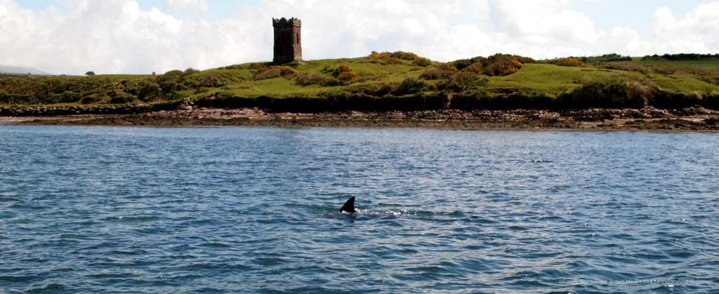 Fungi the Dingle Dolphin Swimming in Dingle Harbour