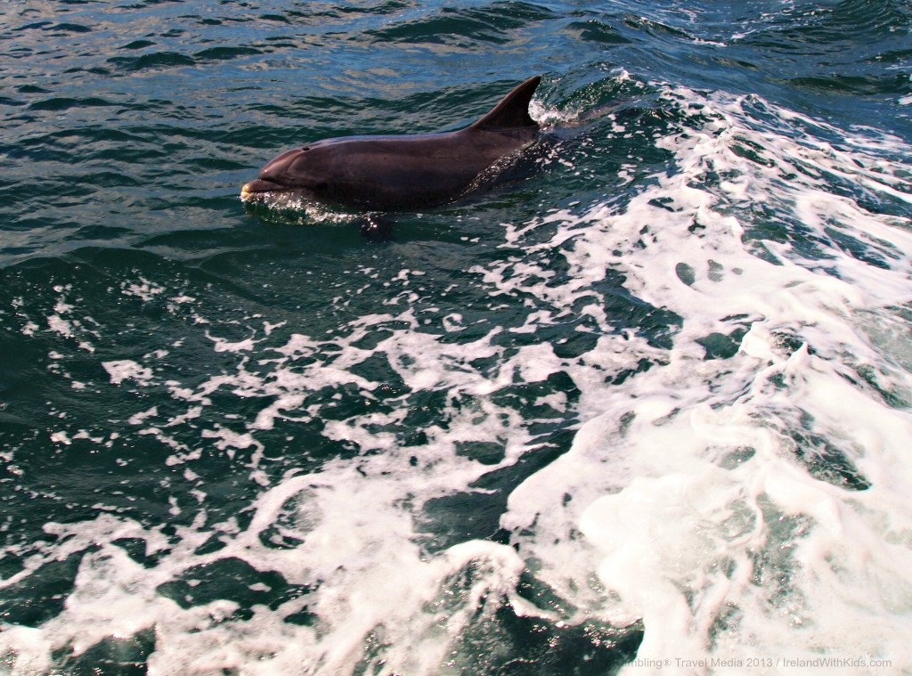 Fungi the Dingle Dolphin