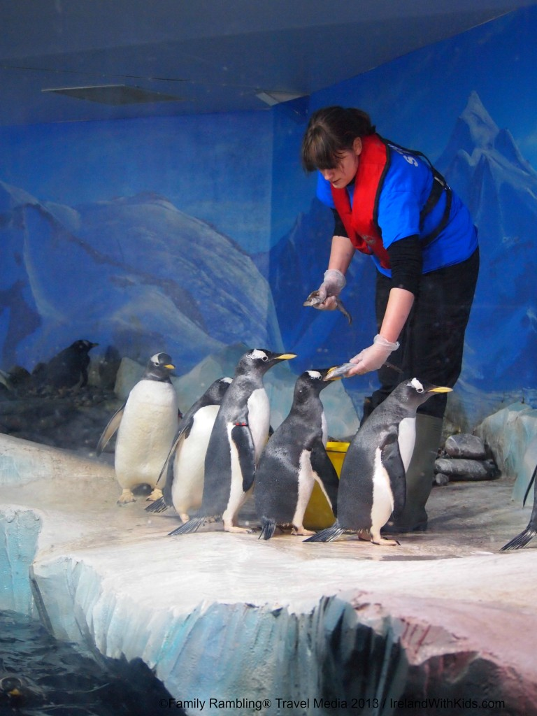 Penguin feeding at Oceanworld Aquarium, Dingle, Ireland