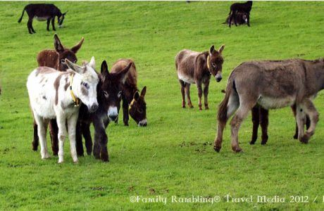 Tour the West of Ireland from Bruff, County Limerick
