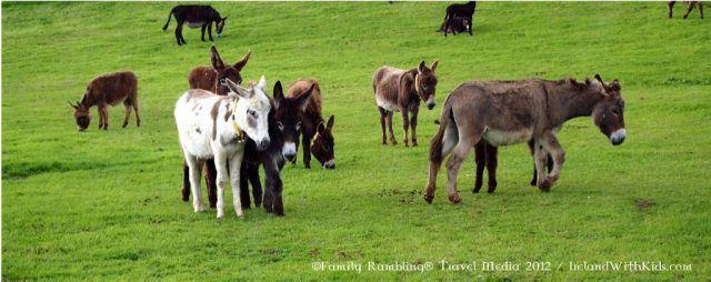 Donkeys at The Donkey Sanctuary, Mallow, County Cork