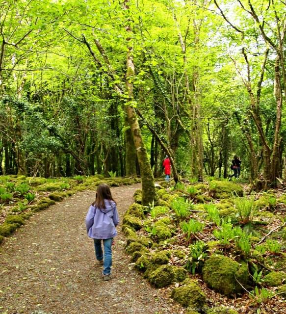 Walking at Craggaunowen, County Clare, Ireland