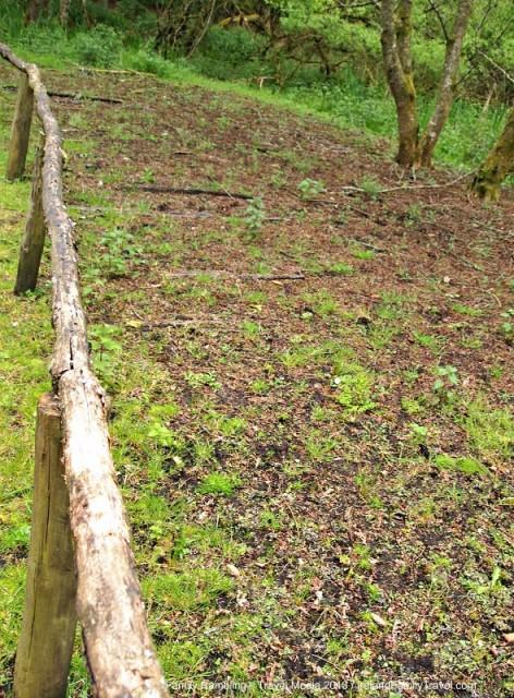 Iron Age Road at Craggaunowen, County Clare, Ireland