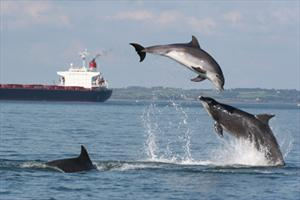 dolphins-co-clare