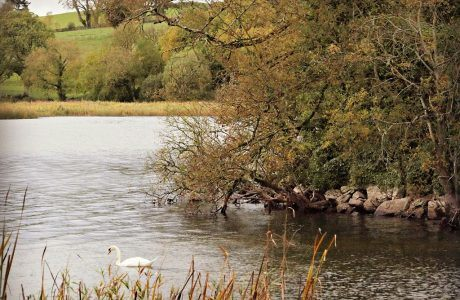 A Guided Tour of Lough Gur with Historian and Author Michael Quinlan