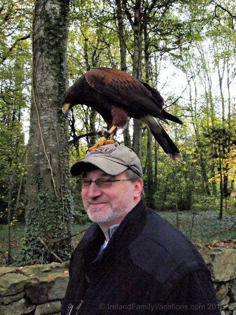 A bird on the head is worth 2 in the bush? Hawk Walk at Mount Falcon Estate in County Mayo Ireland.