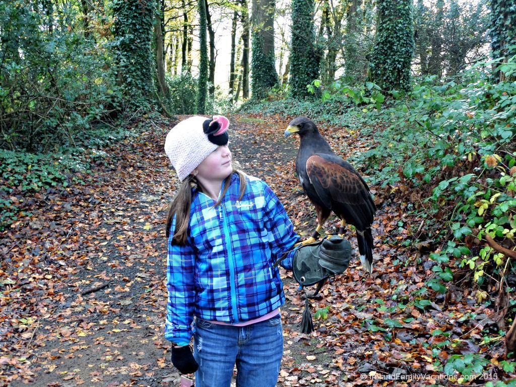 Hawk Walk at Mount Falcon Estate in County Mayo Ireland. Family activities in Ireland