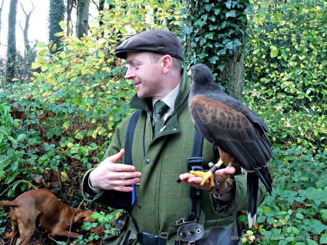 Hawk Walk at Mount Falcon Estate in County Mayo Ireland. Jason Deasey, owner of the falconry and Harris Hawk.