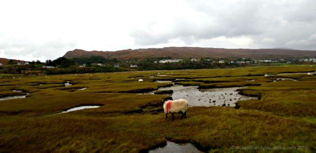 The Atlantic salt marsh between Mulranny Village and Clew Bay was an impulse stop as we drove along the Wild Atlantic Way in County Mayo. The salt marsh gives way to sand dunes before a beautiful beach leads to the sparkling ocean.