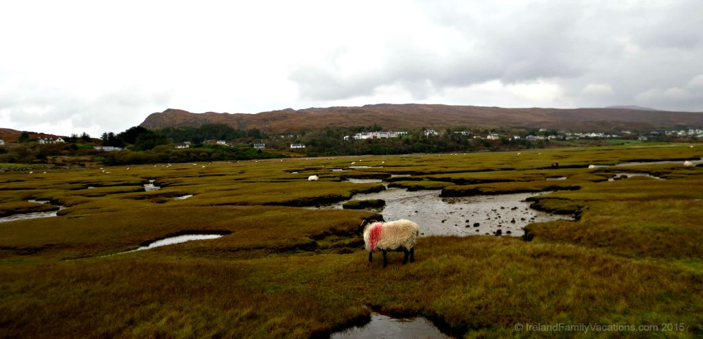 Sheep on the Atlantic Salt Marsh