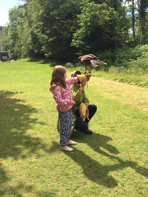 Falconry at Dromoland Castle Hotel. Ireland vacation. Tips for your Ireland Family Vacation.