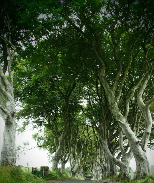 The Dark Hedges, Glens of Antrim, Northern Ireland. Ireland vacation | Ireland travel tips