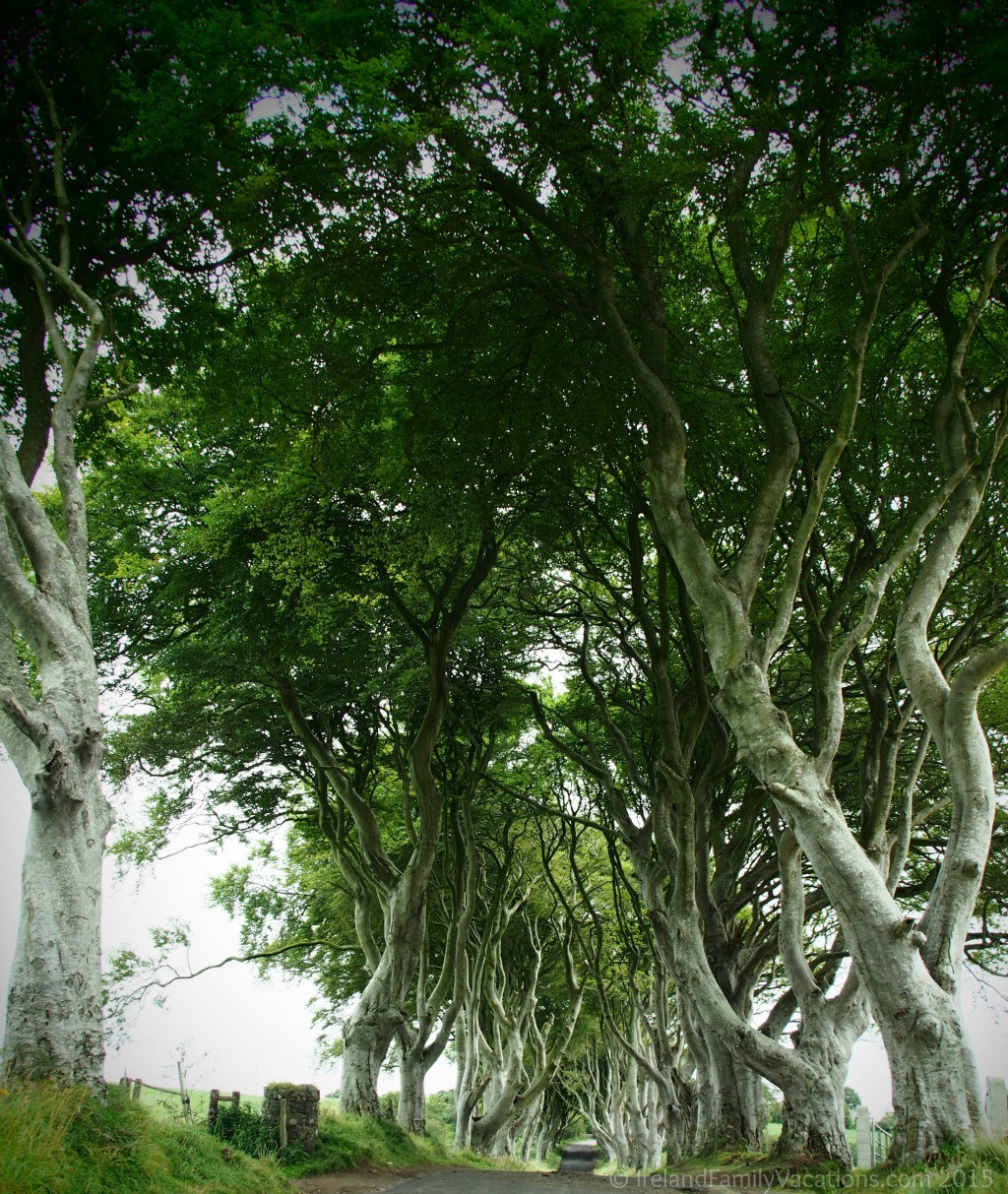 What to Really Expect When Visiting The Dark Hedges