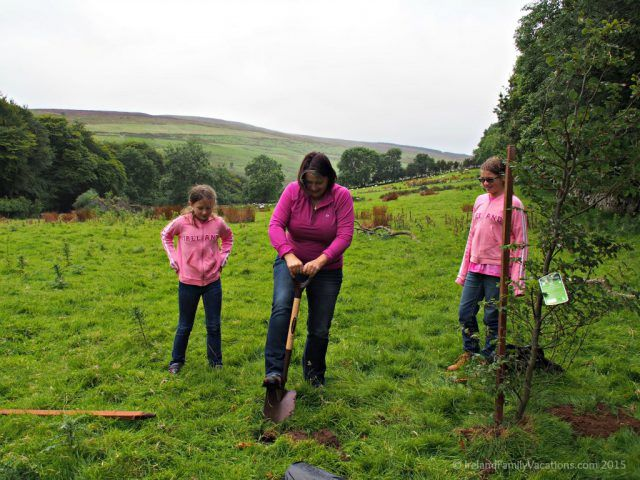Planting trees on our own land in Ireland. Emerald Heritage, Glens of Antrim, Northern Ireland