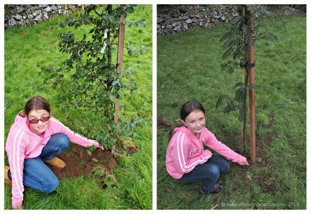 Lucky coins. Planting trees on our own land in Ireland. Emerald Heritage, Glens of Antrim, Northern Ireland