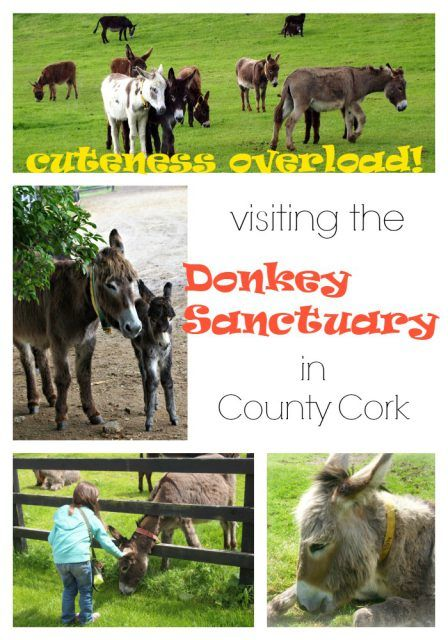 Donkey Sanctuary, nestled in County Cork. The sanctuary is free to visit and a favorite of families. Ireland vacation tips | Ireland travel | IrelandFamilyVacations.com