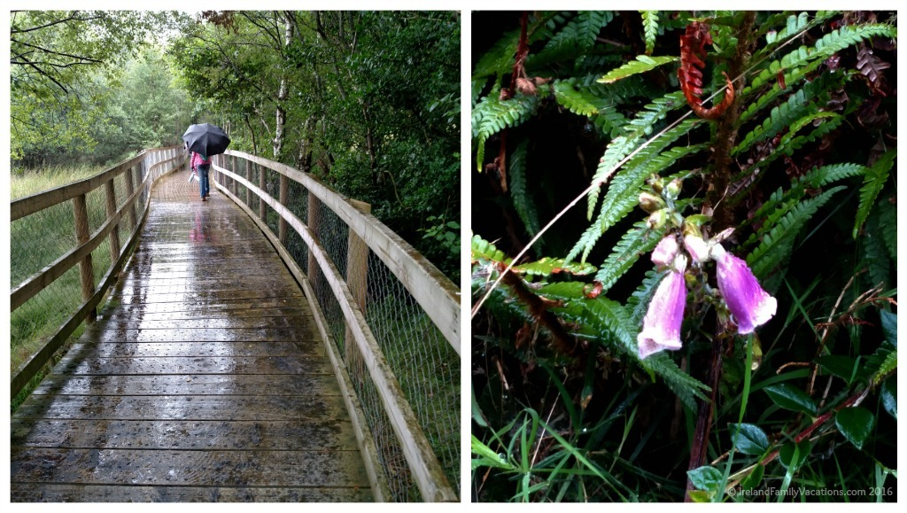 Wonderful Glendalough Walks for Families