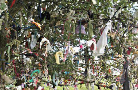 Rag Tree at the Hill of Tara
