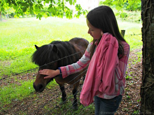 Friendly pony at Bunratty Castle & Folk Park. Ireland travel tips | Ireland vacation |IrelandFamilyVacations.com