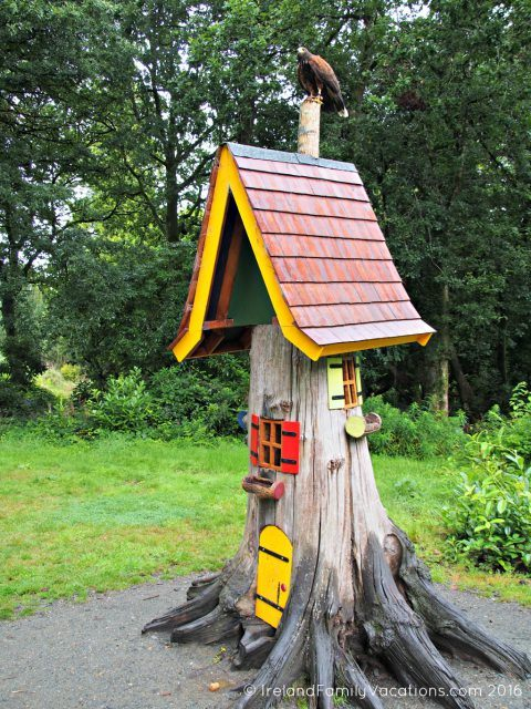 Harris Hawk Perches atop Fairy Treehouse at Wells House in County Wexford. Ireland travel tips | Ireland vacation |IrelandFamilyVacations.com
