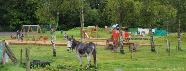 A donkey watches over the playground at Wells House, County Wexford. Ireland travel tips | Ireland vacation |IrelandFamilyVacations.com
