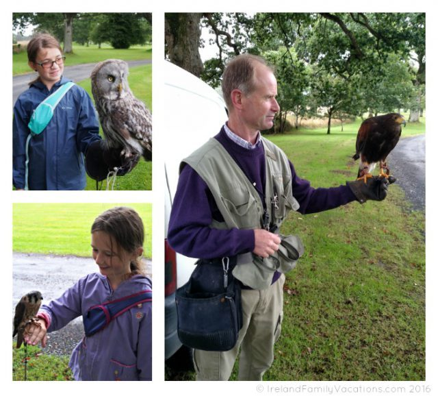 Wells House Falconry Experience with Jim O'Connor. Ireland travel tips | Ireland vacation |IrelandFamilyVacations.com