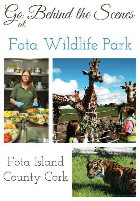 Go behind the scenes at Fota Wildlife Park, County Cork, Ireland. Ireland travel tips | Ireland vacation |IrelandFamilyVacations.com