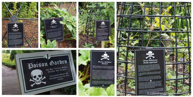 Blarney Castle's Poison Garden. Ireland travel tips | Ireland vacation |IrelandFamilyVacations.com