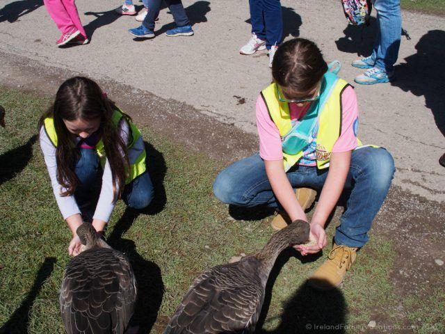 Hand feeding the ducks at Fota Wildlife Park. Ireland travel tips | Ireland vacation |IrelandFamilyVacations.com