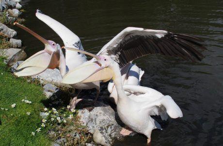 Go Behind the Scenes at Fota Wildlife Park