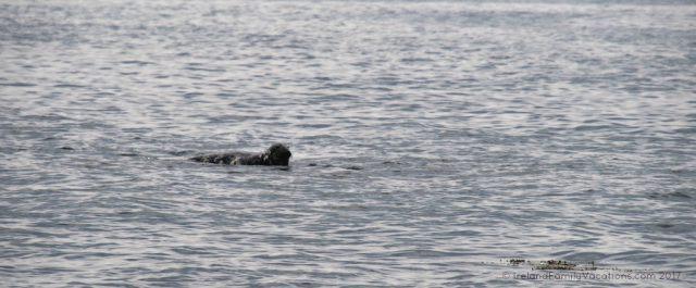 Seal lounging atop the covered shoals near Sligo. Ireland travel tips | Ireland vacation | IrelandFamilyVacations.com