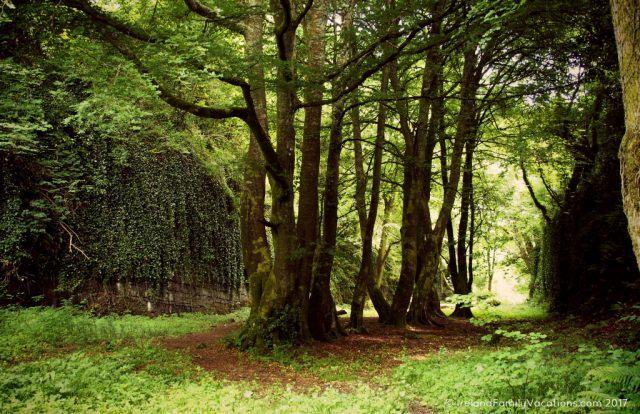 The Hidden Glen, Sligo. Ireland travel tips | Ireland vacation | IrelandFamilyVacations.com