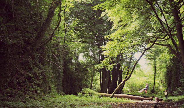 Swinging in the Hidden Glen, Sligo. Ireland travel tips | Ireland vacation | IrelandFamilyVacations.com
