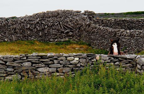 Horse on Inis Oirr, Aran Islands