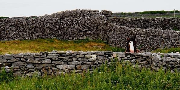 Horse on Inis Oirr, Aran Islands