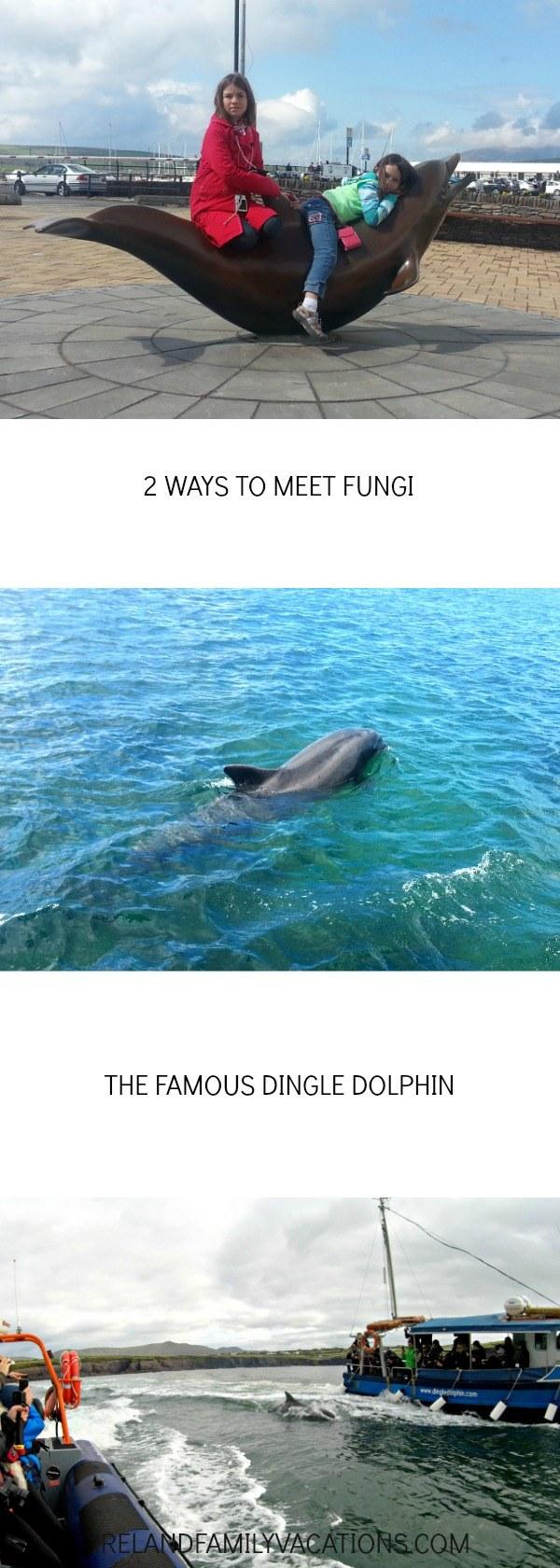 2 Ways to Meet Fungi the Dingle Dolphin. Boat tours in Dingle, Ireland. Ireland travel tips | Ireland vacation | IrelandFamilyVacations.com