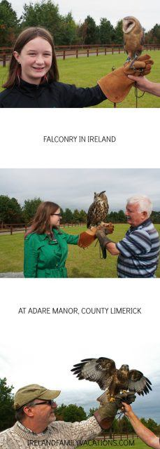 Learn about falconry in Ireland at Adare Manor in County Limerick. Ireland travel tips | Ireland vacation | IrelandFamilyVacations.com