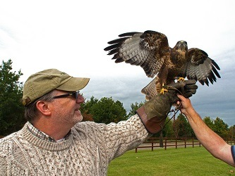 Learning About the Sport of Falconry in Ireland at Adare Manor with Adare Country Pursuits