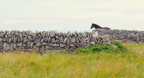 Horse on Inis Oirr