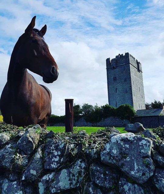 Castlefergus Riding Stables, County Clare, Ireland