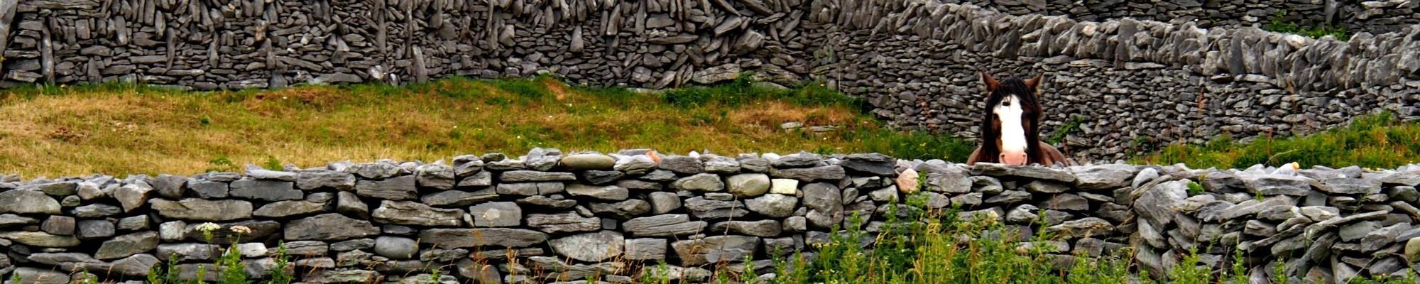 Horse on Inis Oirr, Aran Islands, Ireland. © 2016 Jody Halsted, Ireland Family Vacations; Halsted Enterprises, Inc.