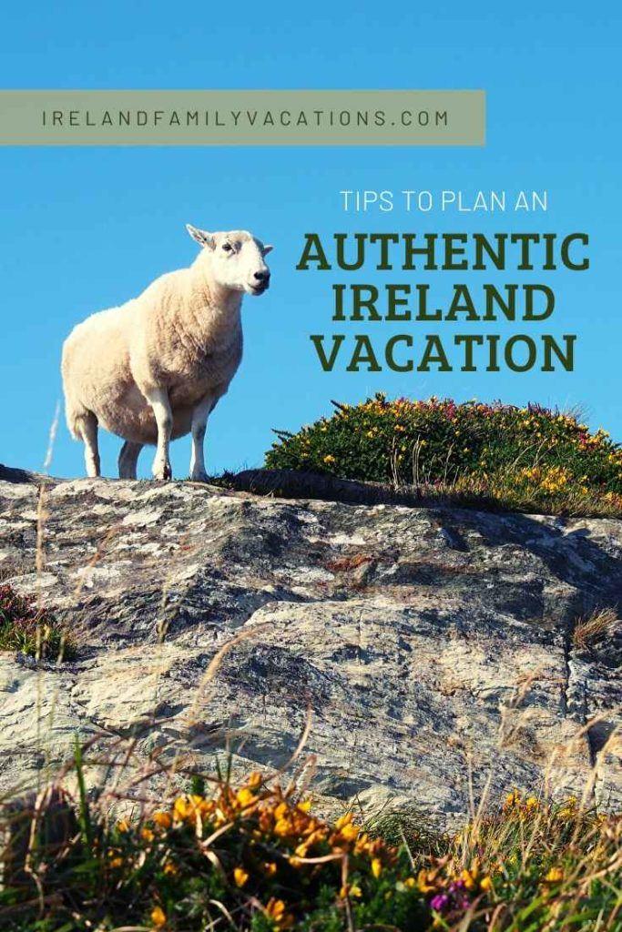 sheep in County Cork, Ireland